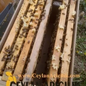 paket arı 6 çıta