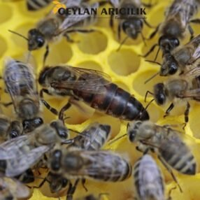 bees 1163028 960 720