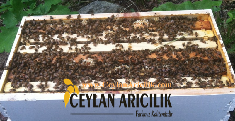 paket arı sparişi