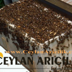 Trabzon paket arı satışı