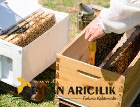 Adana Paket Arı Satışı