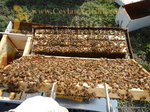 paket arı satışı